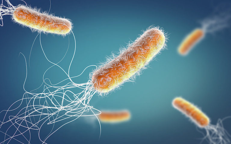 Bacteria found to communicate with each other to resist antibiotics, study shows