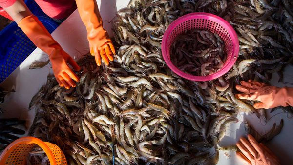 Coronavirus patient zero identified to be a Wuhan shrimp seller