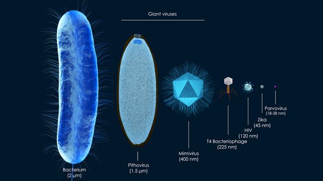 Giant viruses may be more dangerous than the coronavirus, new study