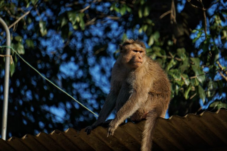 Experimental vaccine confers protection against COVID-19 in monkeys
